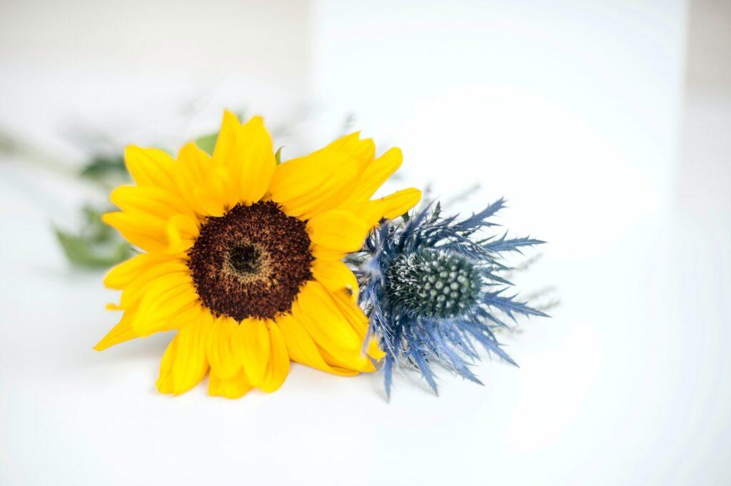 Zaproszenia ślubne w zwiankami i dodatkami ZaprosNaSlub