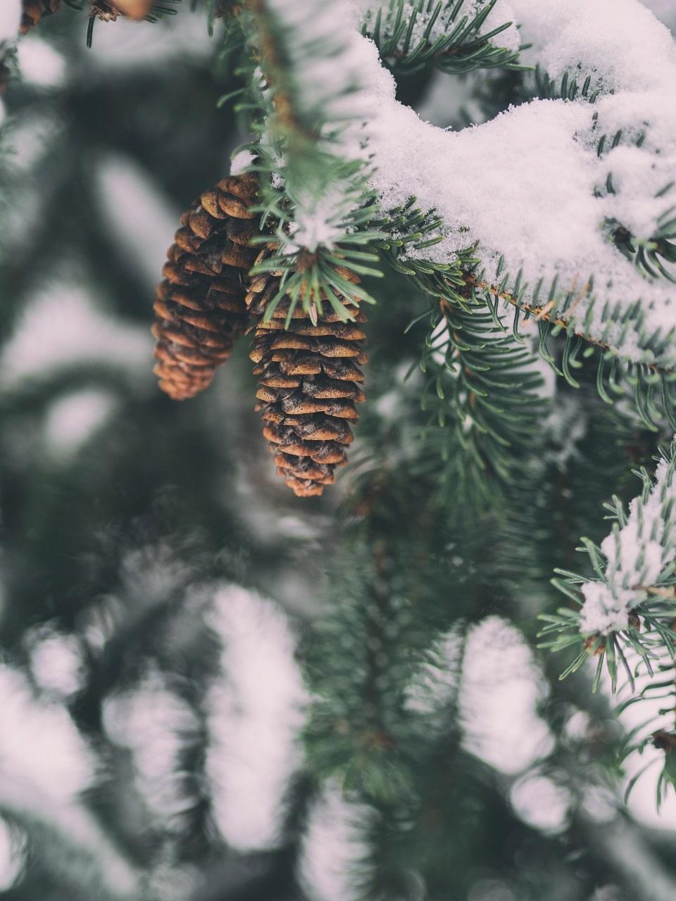 Zimowe Zaproszenia ślubne z motywem zimy ZaprosNaSlub