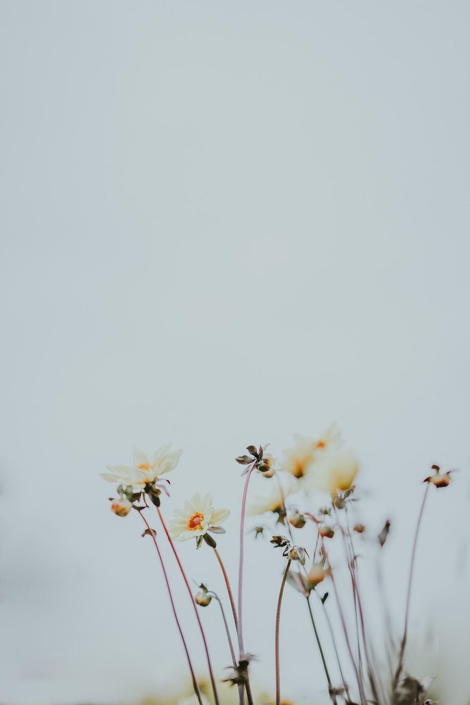 zaproszenia ślubne z motywem kwiatów zaprosnaslub